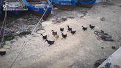 这群海岛原住民下的才是正宗海鸭蛋,回陆地前我决定整一筐回去腌了吃