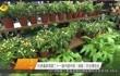 杜家毫参观第二十一届中国中部(湖南)农业博览会