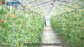 有机蔬菜-用情怀去做有机蔬菜-1688shucai.com
