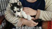 【二哈】狗狗严重贫血,暖心的男子给它喂药补血,二哈委屈的像个孩子,逗