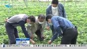 【厦门】同安区:春耕备耕 不误农时