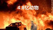 救救它们,澳洲大火持续4个月,4.8亿只动物葬身火海
