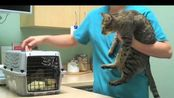 猫咪的日常VLOG8.8.2009我家猫咪的定期医生检查【TheMeanKitty】
