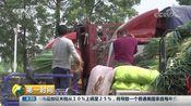 [第一时间]山西临汾:大葱上市 价格大幅上涨