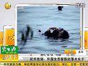 杭州西湖金发碧眼女游客救起落水轻生女[健康www.haojiankang.tk]