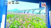 云浮罗定550亩紫云英迎春绽放