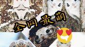 【百态百生】世界上最萌动物之一,单眼放电,与粤语碰撞
