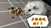[仓鼠]当蛋白听到要喂食的声音,会发生什么呢?