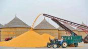还未大量上市,东北玉米就跌价,啥时候卖粮合适?