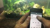 iphone4s运行ios8!流畅度感人