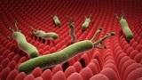 胃里有幽门螺杆菌,会引发消化道疾病,可尝试2种方法,赶走细菌