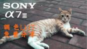 索尼A7M3调色分享CINE2 调色lut可以一键套用
