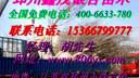 【银杏树苗价格】40-50-60-70-80-90公分高银杏苗价格