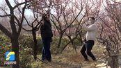 阳春三月!济宁泗水千亩梅花盛开 春光无限 跟随镜头来感受一波