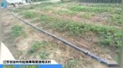 磷酸二氢钾-江苏省徐州市赵姐草莓苗使用沃叶,苗势健壮,叶片浓绿肥厚!