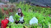 云南小县城封城,老年人在家没菜吃了,小妹到村委会开证明送菜去!