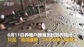 【江西】损失惨重!洪水造成吉安一养殖户28000只鸡死亡