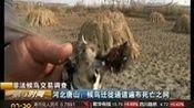 [第一时间]河北唐山:候鸟迁徙通道遍布死亡之网