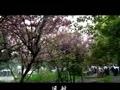 贵州省瓮安三中校歌(倪伟执导)          弹窗  关灯