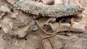 """江西省发现一古墓,里面有一条""""龙"""",专家赶来后立即申请武警保护"""