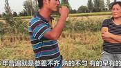 河南南阳水稻正在收割,你知道收一亩多少钱?党哥带你到现场了解