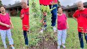 中国丈母娘逗外国女婿,骗老外吃新鲜花椒,老外的反应真是太逗了!