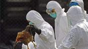 四川省西充县发生一起家禽H5N6亚型高致病性禽流感疫情