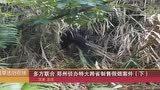 制售假烟人员逃跑,河南专案组跨省办案,直捣广东山区造假窝点