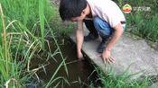 华农兄弟:把鱼钩往水沟里一放,跑去摘枇杷果,回来鱼就上钩了