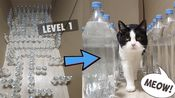 Mission Impossible.Bottle Maze With Water For Cat.3 Levels
