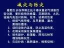 永济市葡萄培训专场—葡萄临界期管理技术 3.4