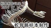 1000条肋骨怎么分的清楚啊!!!蛇类骨骼标本制作
