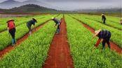 农村又有一新规定,明年将出台新土地制度,农村户口的农民有福了