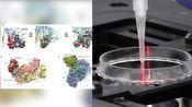 韩国研究团队宣布发现新冠病毒抗体:或对疫苗研发作出贡献