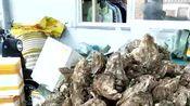 北海勤旺生蚝养殖厂,附近生蚝批发市场,贵州六盘水生蚝多少钱一斤