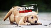 一只狗呈弱阳性,所有狗都要被杀掉吗