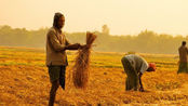 同样是人口大国,为什么印度向全世界出口大米,中国要满世界购买