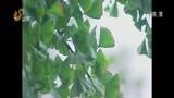 [早安山东]最新天气:今日德州小雨 未来三天山东多地阴有小雨