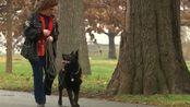 宠物犬救主人性命!嗅出主人患有早期肺癌,奇迹般的技能