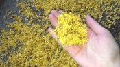 保存桂花有技巧, 这样处理后的桂花, 放多久都不会坏, 和新鲜的一样