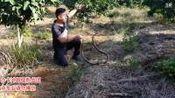 蛇类科普蛇哥直播录像2019-10-29 13时29分--18时32分 蛇类科普117期