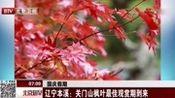 辽宁本溪:关门山枫叶最佳观赏期到来