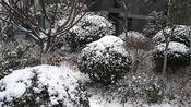 济宁:春天一场雪,春色别样景!