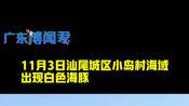 """广东汕尾海域惊现白色海豚,疑似""""海上大熊猫""""中华白海豚"""