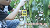 【托普云农】活体抗倒伏测量仪 不损伤玉米茎秆