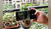 手机拍照可以自带文字图案?简单又好学