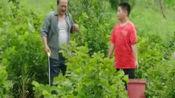 乡村爱情12:谢广坤向老师请假,不让腾飞上学,专教他打农药