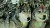 P 06【二哈轨迹】只狼·影逝二度受苦实况:三杀精英怪
