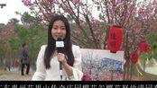 CCTV:广东惠州花果山传奇庄园樱花谷樱花怒放满园春