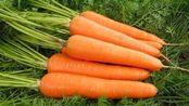 医生反复提醒:胡萝卜不能与它同食,不然就是没病找病!